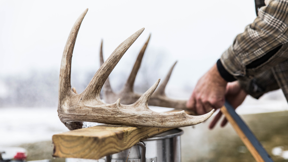 Meateater Hunting Ask Meateater How Do You Make A Skull