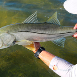 Plan B in the Keys: Poor Conditions Don't Have to Ruin Your Fishing Trip