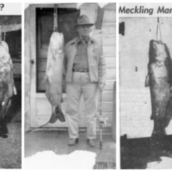 70-Year-Old Catfish Record Voided Over Misidentification