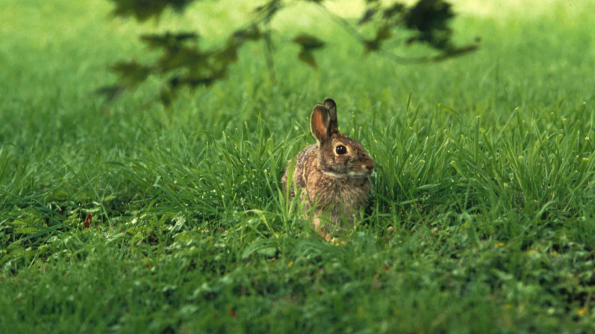 Fact Checker: Is It Unsafe to Eat Rabbits Before the First Frost ...