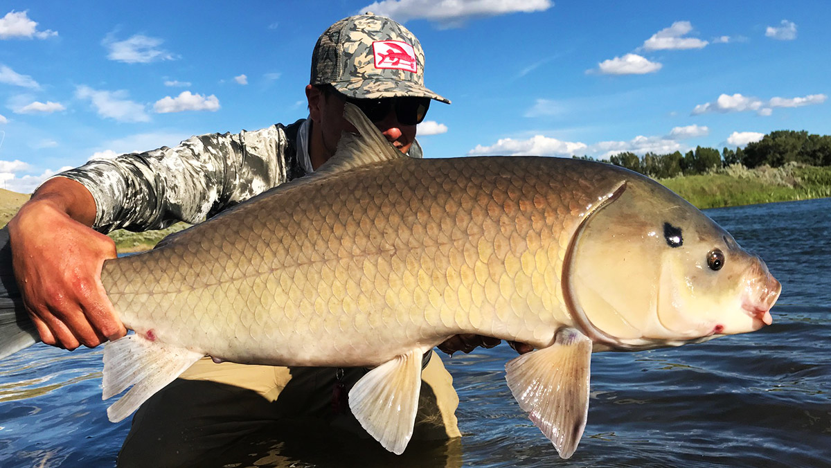 Trash Fish Tuesday: Bigmouth Buffalo | MeatEater Fishing
