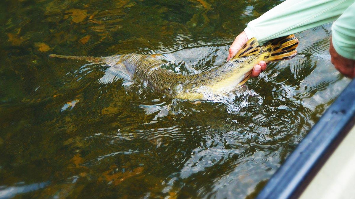 Trash Fish Tuesday: Gar | MeatEater Fishing