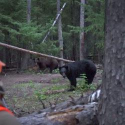 Four Ways to Kill a Fall Black Bear
