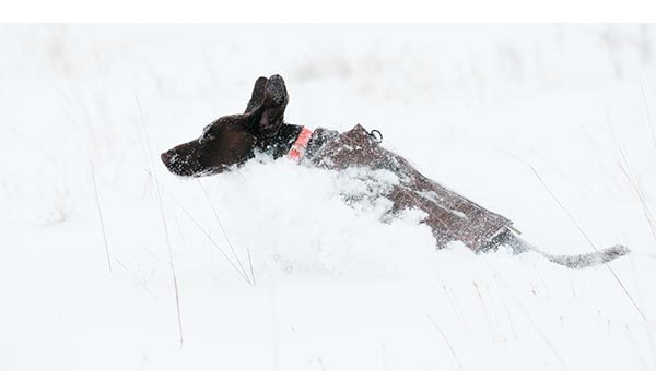A GSP bounds through the snowy conditions.