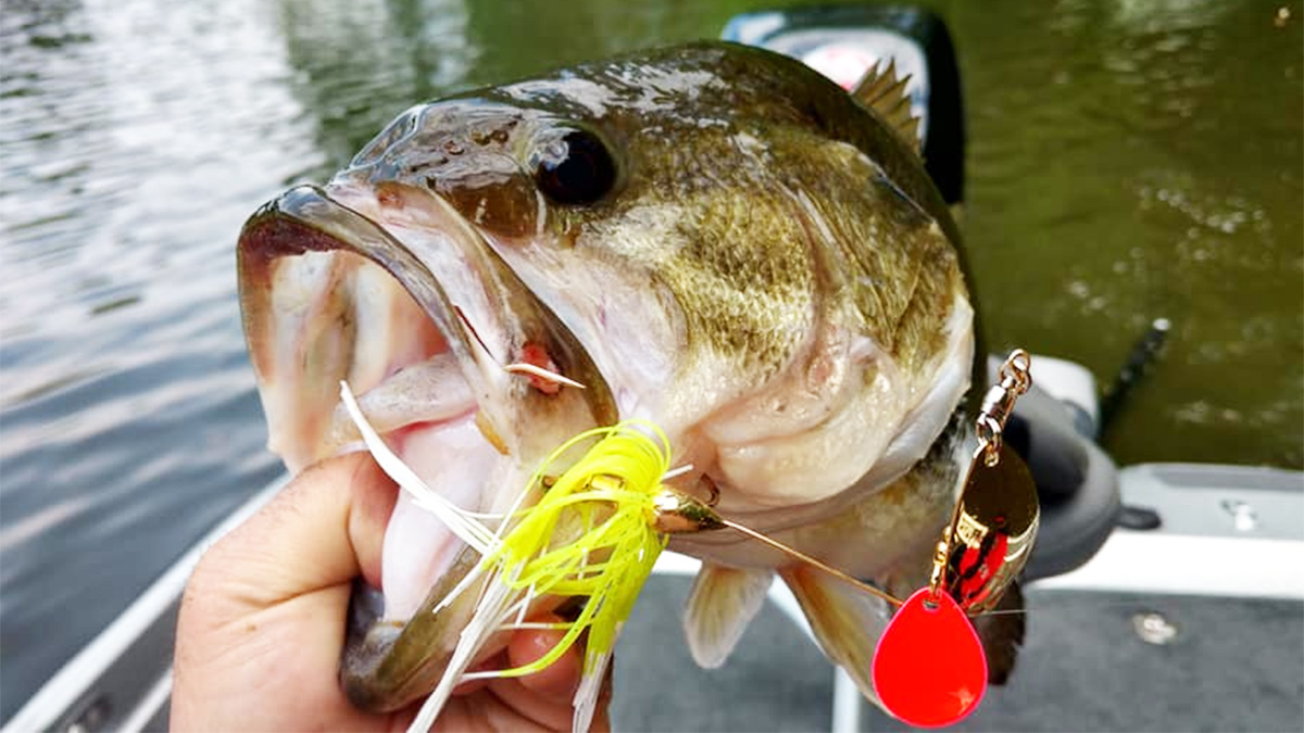 Bass-ic Instinct: Don't Ever Put Spinnerbaits Out To Pasture ...