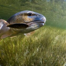 Ask A Biologist: Do Pressured Fish Learn to Avoid Certain Lures?