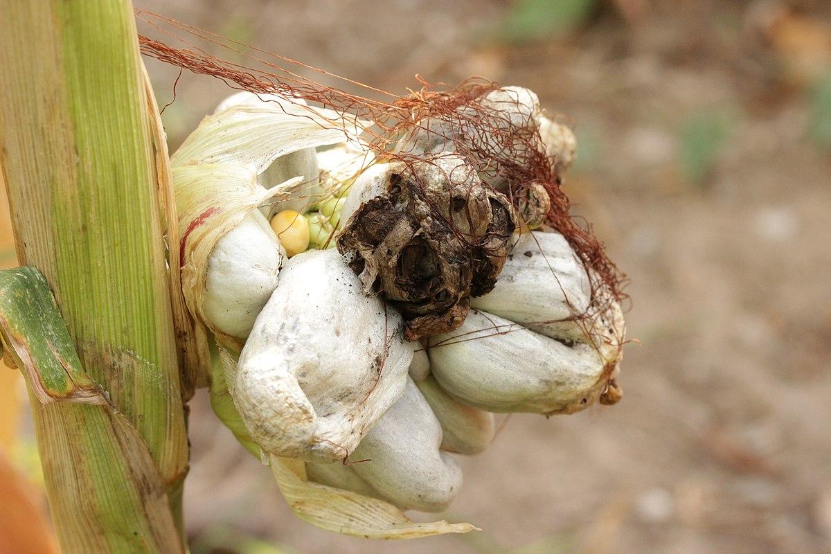 edible fall mushrooms
