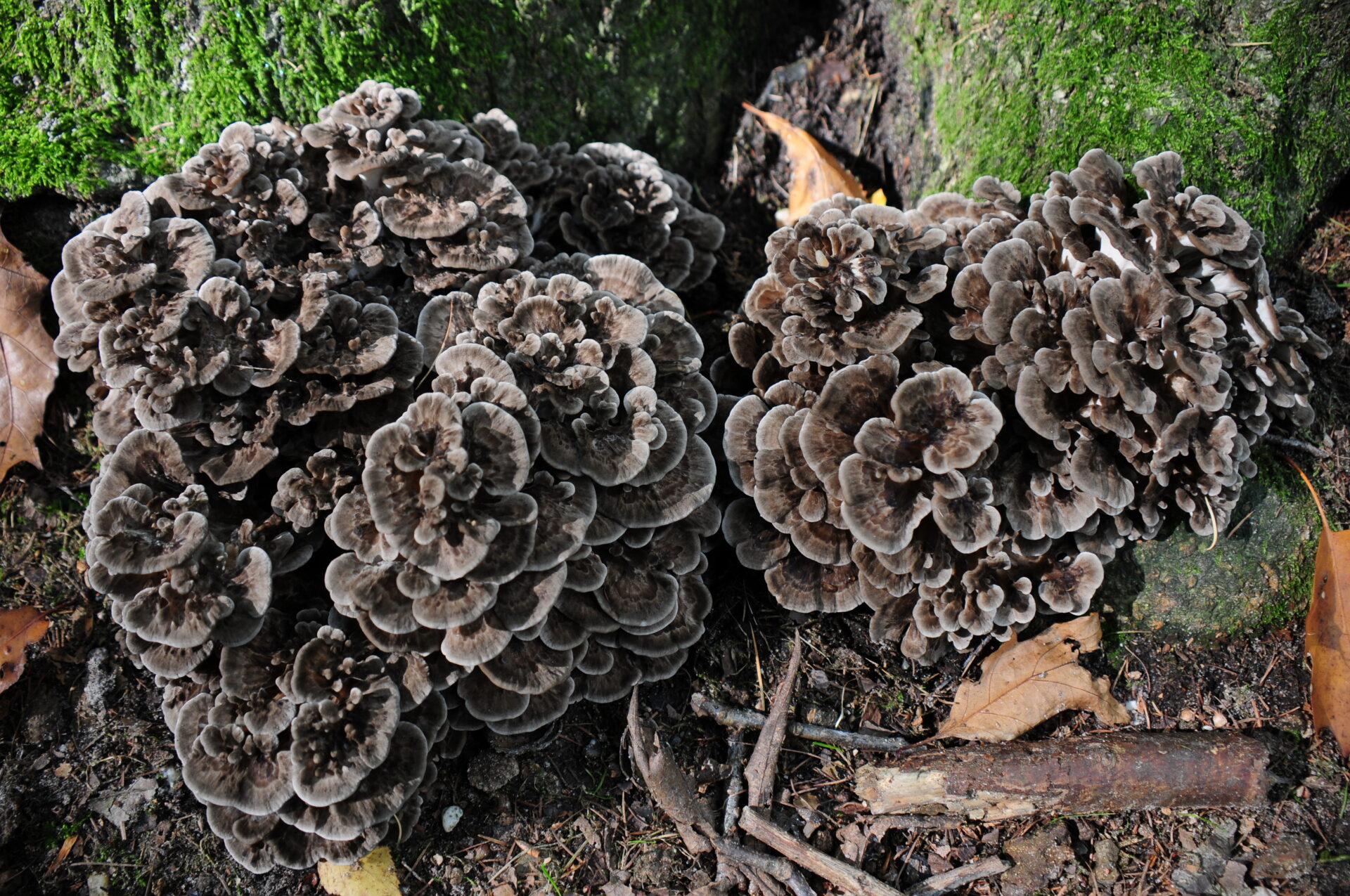 best fall mushrooms