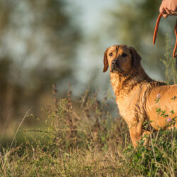 The 'Shake' Command Every Hunting Dog Should Learn