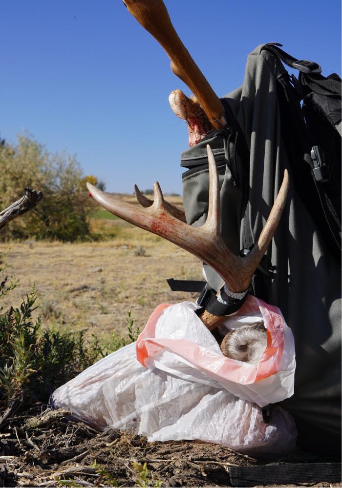 deer rut report