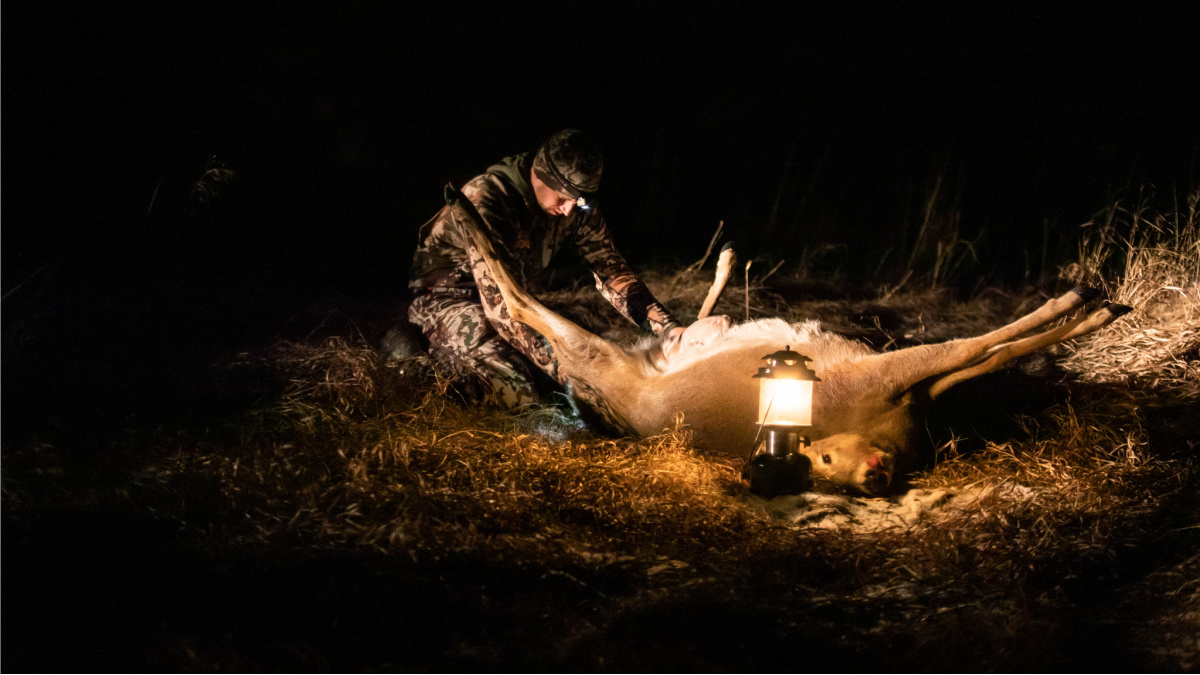Is Killing More Deer the Answer to Reducing Tick Diseases ...